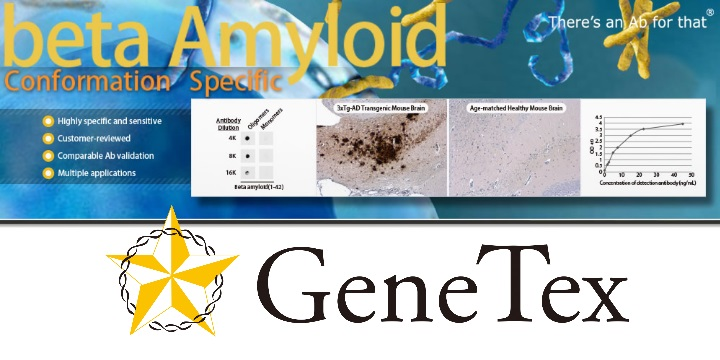 GTX134510 beta Amyloid (1-42) Conformation Specific